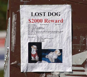 Tips to Help You Find Lost Pets